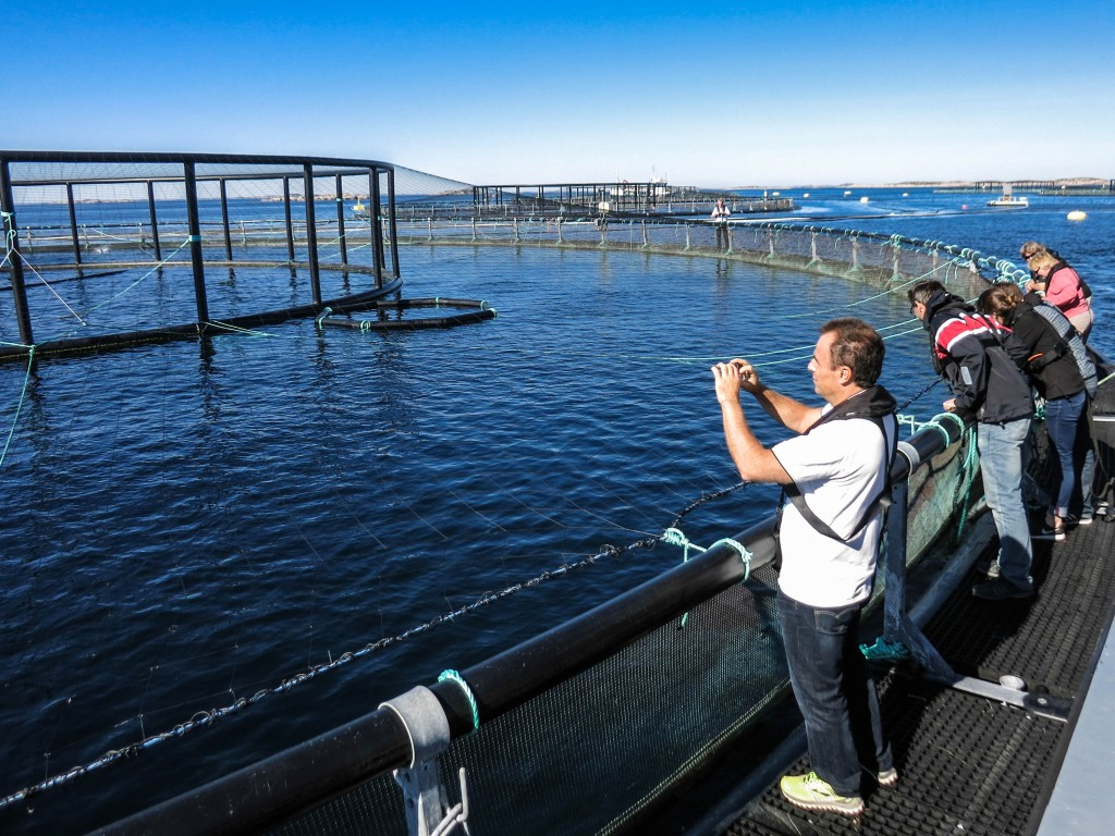 On the floater. Standing on the cage floater the size of the farm becomes more apparent. Hydrodynamicist Claudio Lugni from CRN-ICEAN in Rome is fascinated.