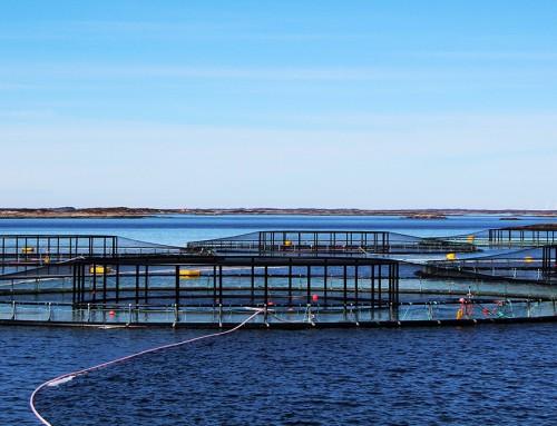 Safetec – ny partner som kan bidra til en sikrere havbruksnæring