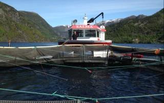 Bilde av båt og merd på sjøen